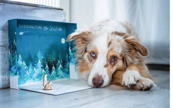 Schnauzbert - Adventskalender für Hunde